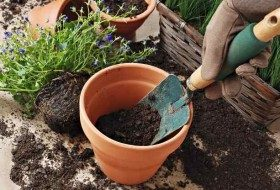Basic Gardening Myths Dispelled