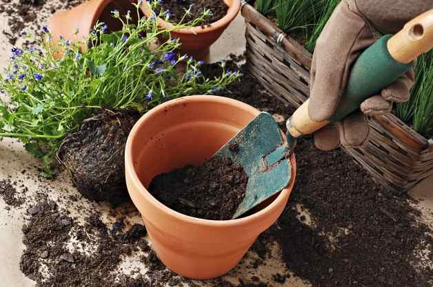 Basic Gardening Myths