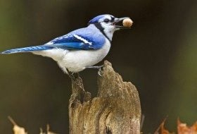 Bird Behavior: Caching Food