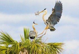 Cooperative Bird Behavior