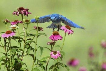 Native Bird Garden