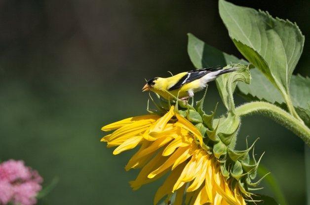 Native Bird Care of Sisters, Oregon - Bienvenido a Native Bird Care