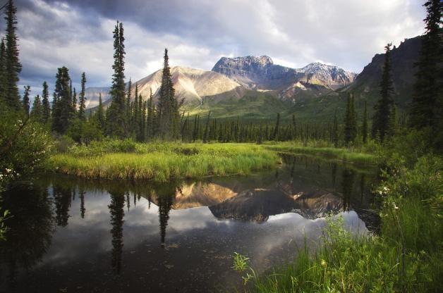 Birding Hotspots In The Wilderness