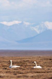 Birding hotspots