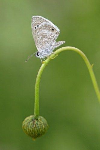 Butterflies Guide