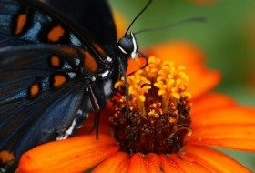 Year-Round Guide to Butterflies