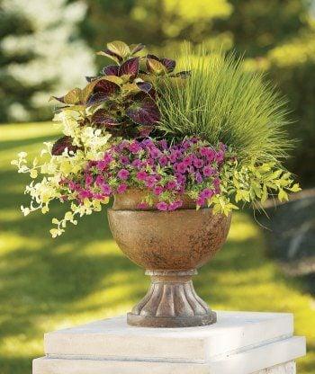 Contaner Garden Ideas