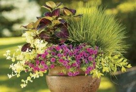 Big Container Garden Ideas