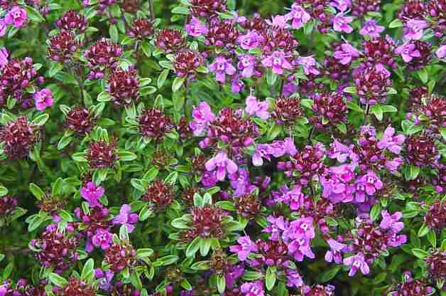 top  colorful groundcovers  birds and blooms, Beautiful flower