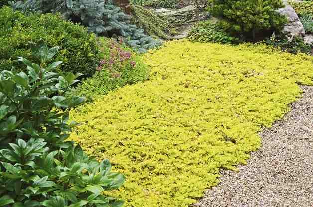 top  colorful groundcovers  birds and blooms, Natural flower