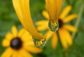 Plant a Rain Garden