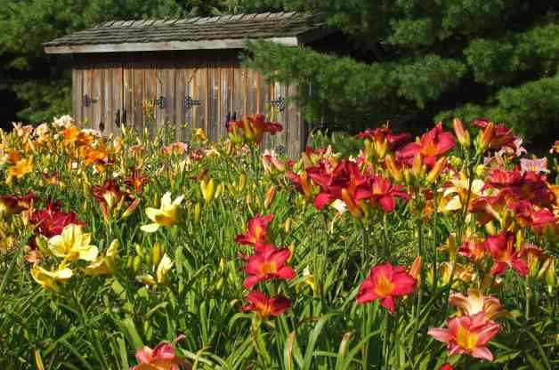 Transplanting Perennials - Birds and Blooms