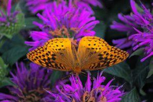 Watching Butterflies