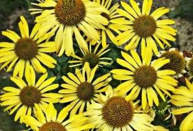 Top 10 Classic Yellow Flowers