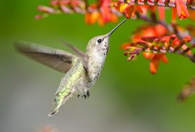 Plants and Flowers to Attract Hummingbirds