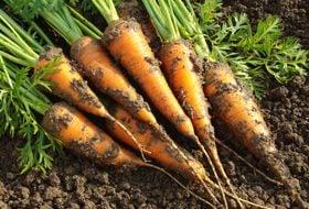 Fruit and Vegetable Gardening