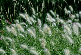 Growing Trees, Shrubs and Grasses