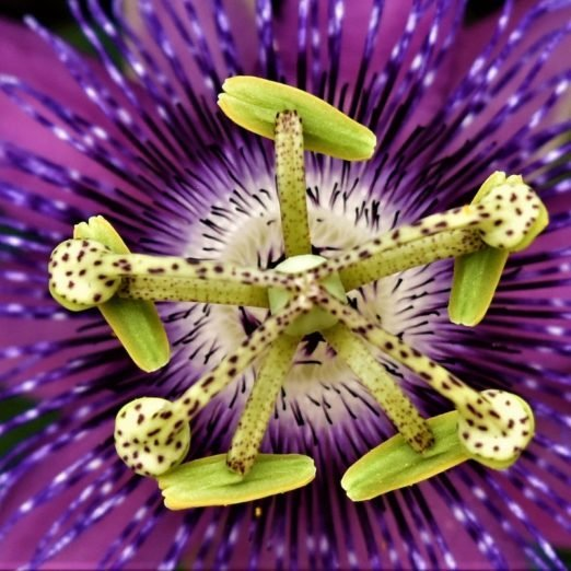 Top 10 Butterfly Host Plants to Attract Pollinators