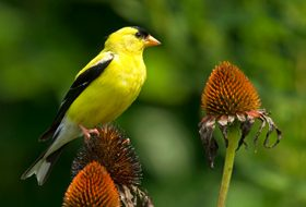 Plants and Trees That Attract Birds