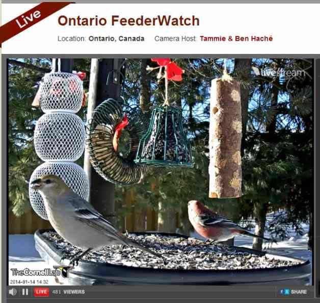 Bird Cams Ontario