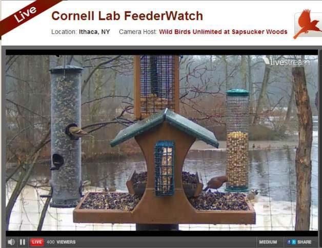 Bird Cams Cornell
