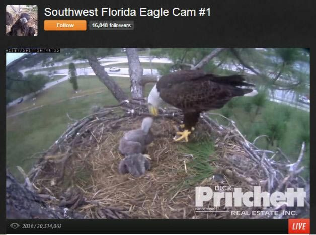 Bird Cams Florida