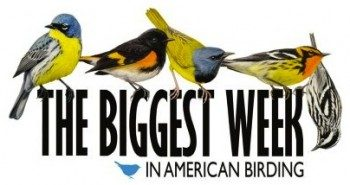Biggestweeklogo