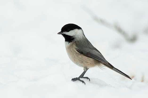 A Recap of Birding Basics
