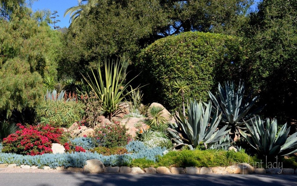 Drought Tolerant Gardens Ugly or Beautiful Birds and Blooms