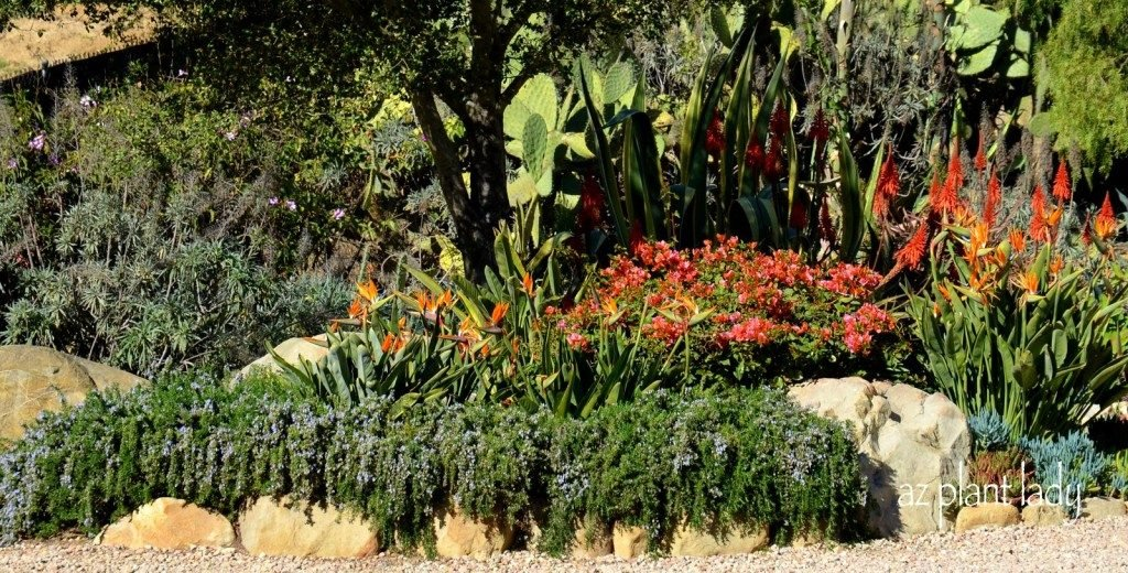 drought tolerant gardens ugly or beautiful birds and