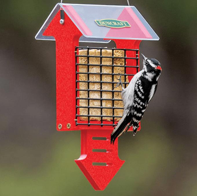 red arrow feeder