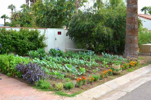 Backyard Vegetable Garden Ideas For Small Yards : vegetablegardenfrontyard