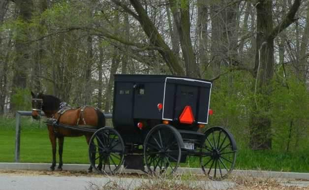 Amish_buggy