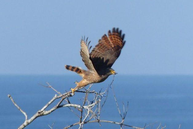 Birding Hotspots Costa Rica
