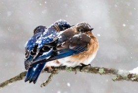 Helping Birds in Winter