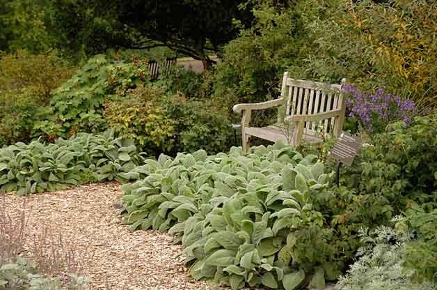 Grand Ground Cover Ideas: Lambs' Ear