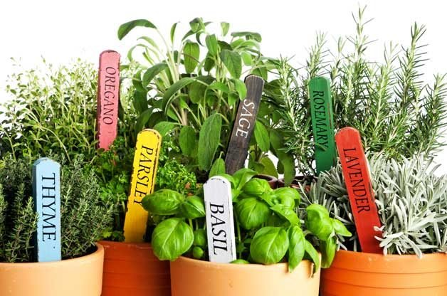 How to Grow Herbs in Winter