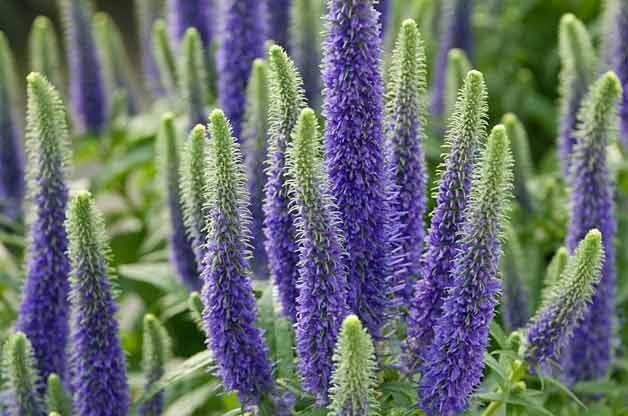 Top 10 drought tolerant plants gardening birds blooms for Best flowers to grow in california