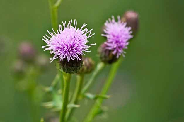 Gardening Basics: Identifying Weeds in Your Garden