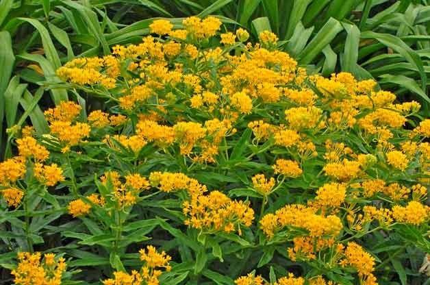 Gardening Basics: Identifying Weeds in Your Garden