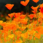 Top 15 Drought-Tolerant Plants That Can Handle Dry Weather