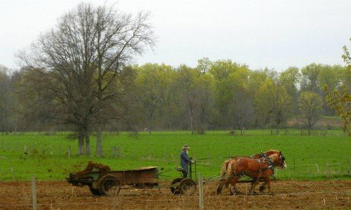 fertilizing_amish_indiana