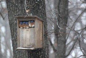 Friday Funny Photography: Box o' Bluebirds