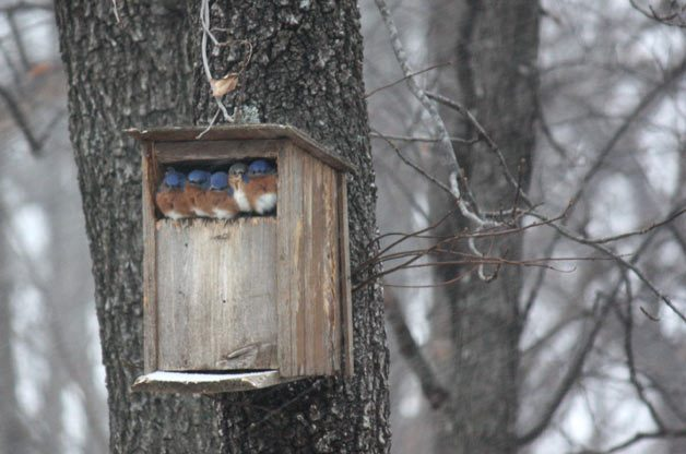 Friday Funny Photography: Box o' Bluebirds