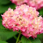 Top 10 Flowering Shrubs for Your Yard
