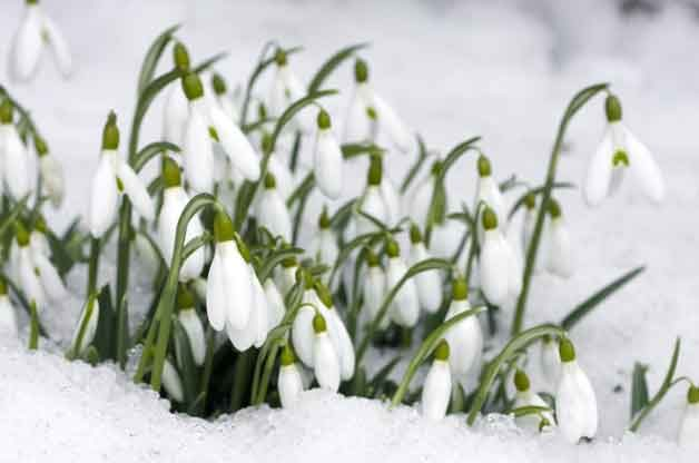 Winter Gardening: Nine Striking Plant Ideas