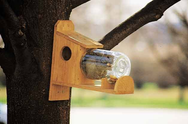 How To Make A Diy Squirrel Feeder Birds And Blooms