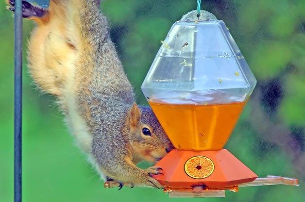 You Don't Say: Squirrel Acrobatics