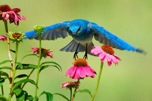 The Cutest Birds in America