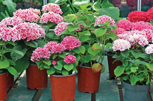 Gardening Basics: Secrets from the Garden Center